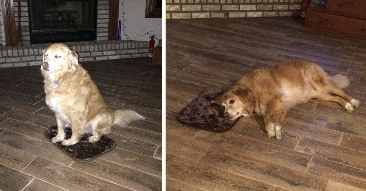 Big Dog Makes Most Of His Tiny Bed Because He's A Very Good