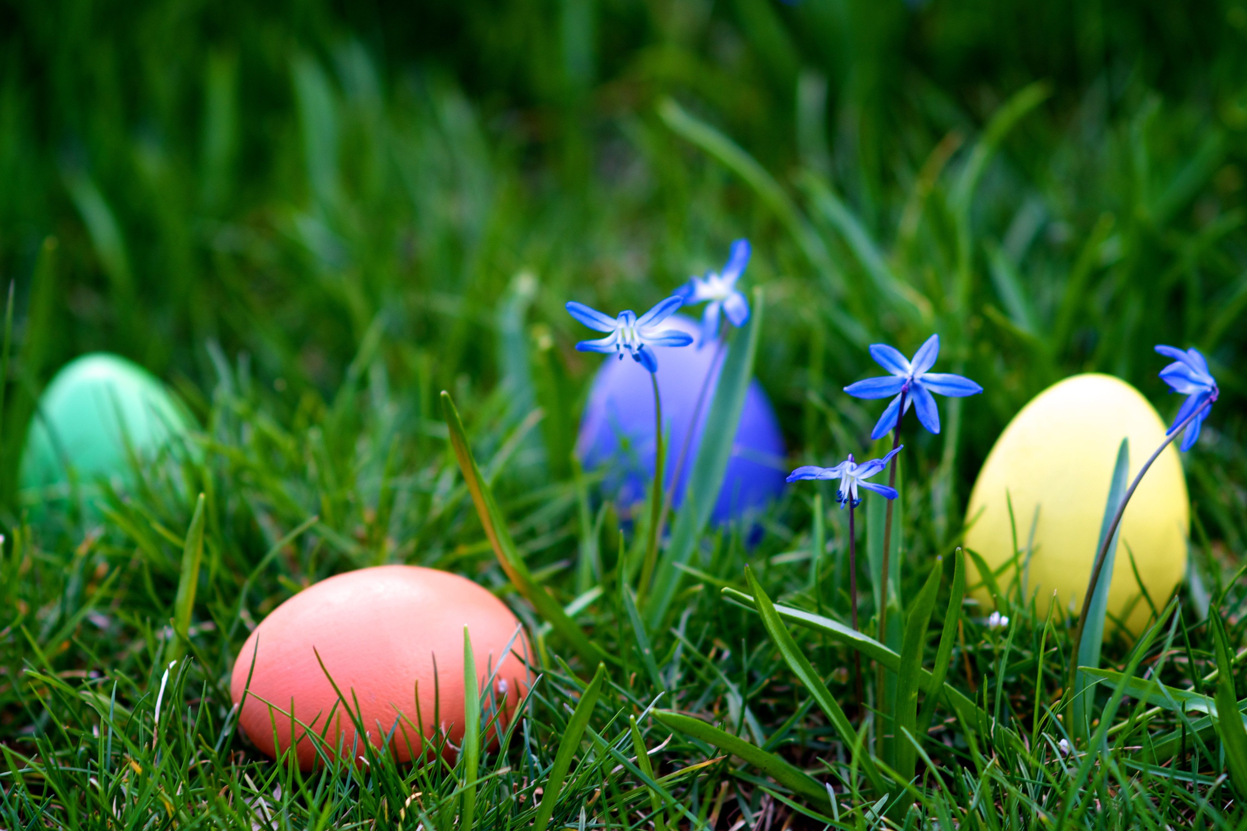 Colorful Easter eggs hidden among grass and flowers.