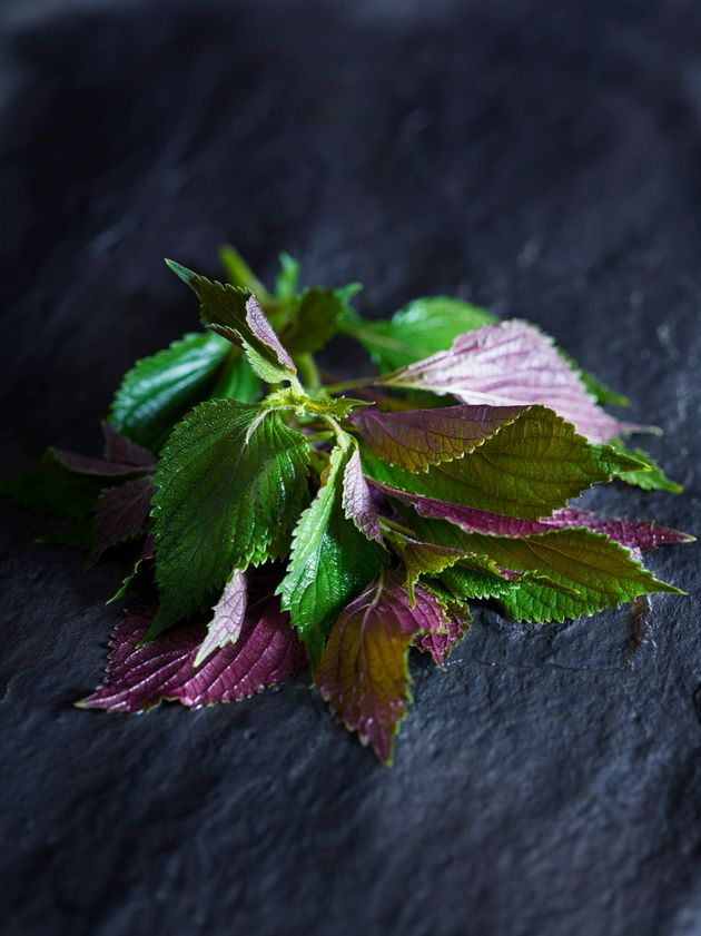 What Is Shiso? Gwyneth Paltrow's New Scent Will Mystify Most Of