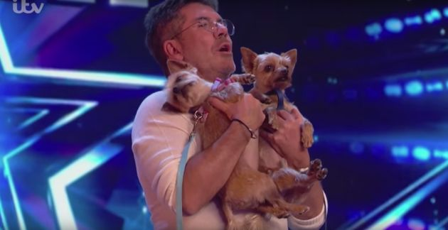Simon Cowell's dogs weren't exactly naturals at