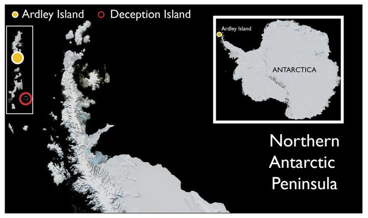 The location of Ardley Island and Deception Island in Antarctica.