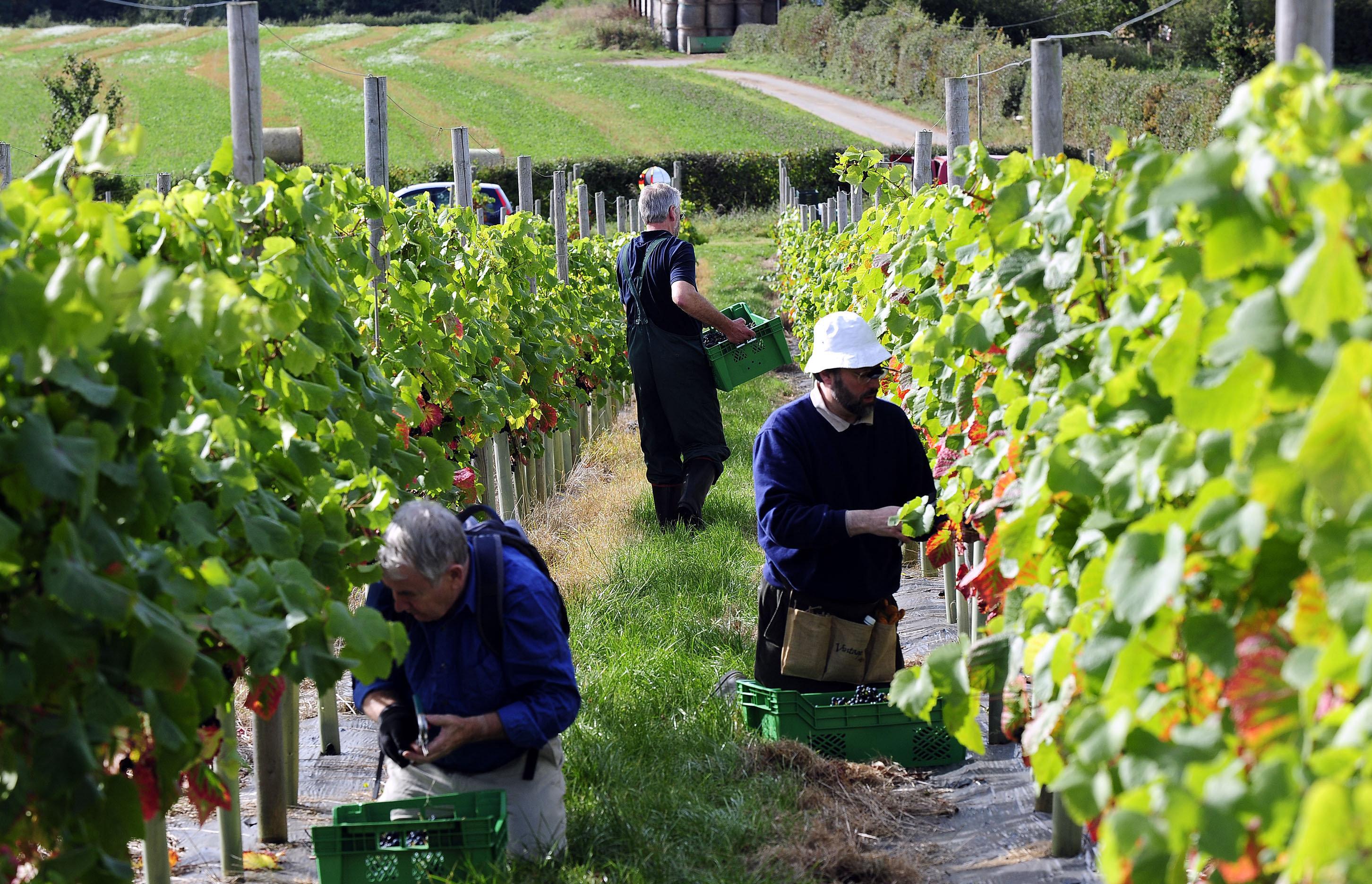Fruit pickers are among those often employed on zero-hour