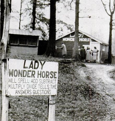 Sign welcoming visitors to see the psychic horse.