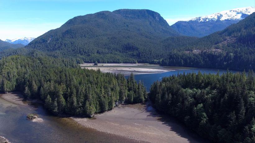 "The Great Bear Rainforest. Scene from <a rel=""nofollow"" href=""https://vimeo.com/ondemand/thegrizzlytruth"" target=""_blank"">The"