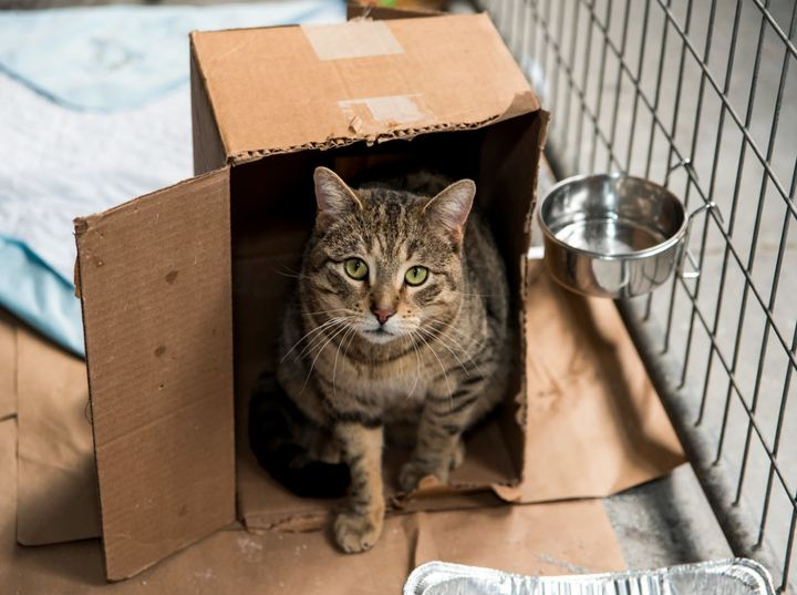 A cat from Animal Care Centers of NYC