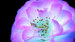 Amazing Photos Capture How Flowers Look Under Ultraviolet