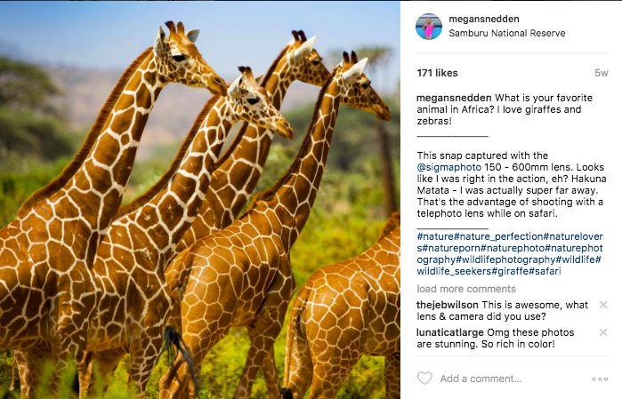 In Kenya's Samburu region, Reticulated Giraffes photographed at 600mm.
