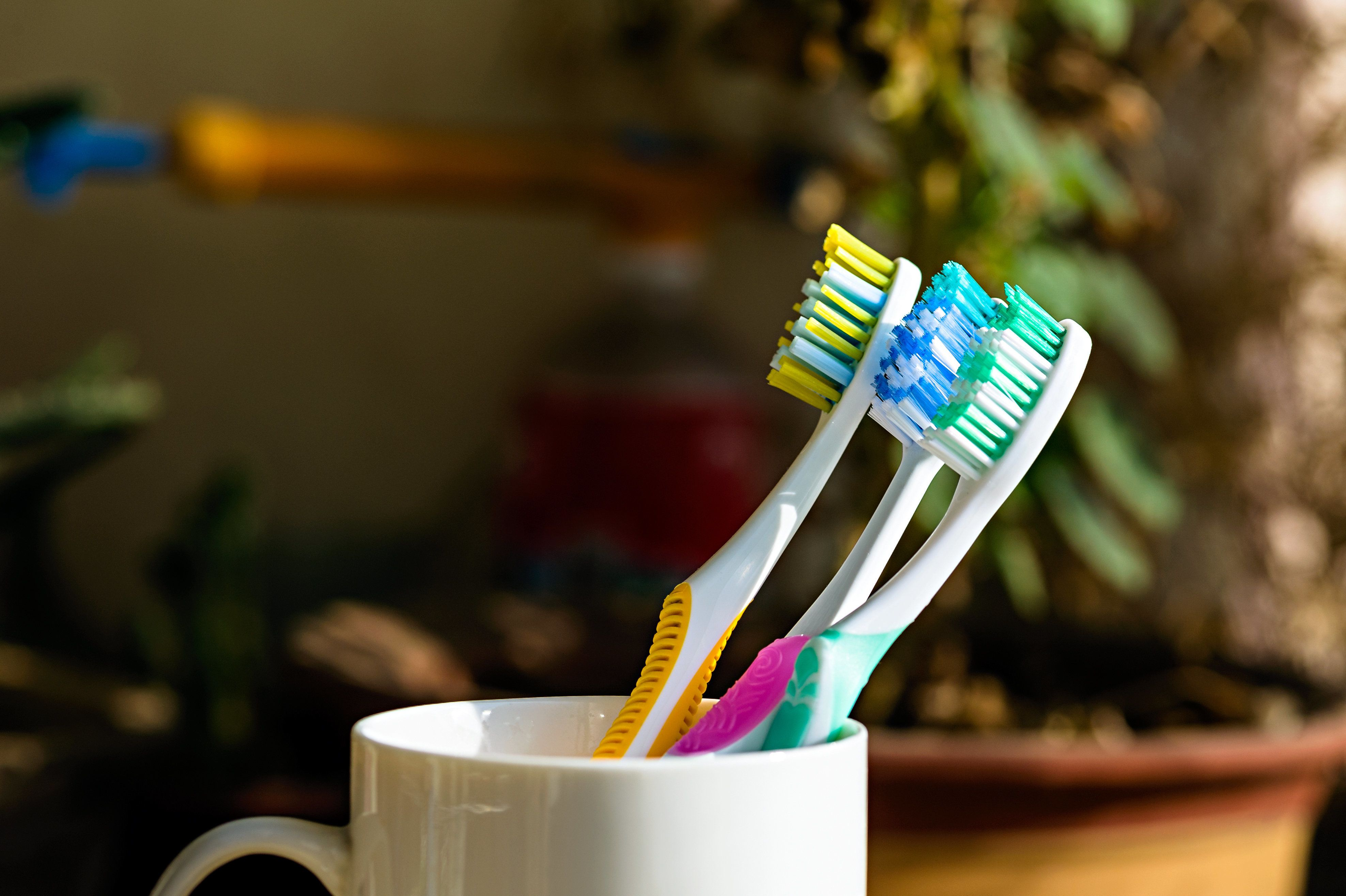 Three Toothbrushes on a cup