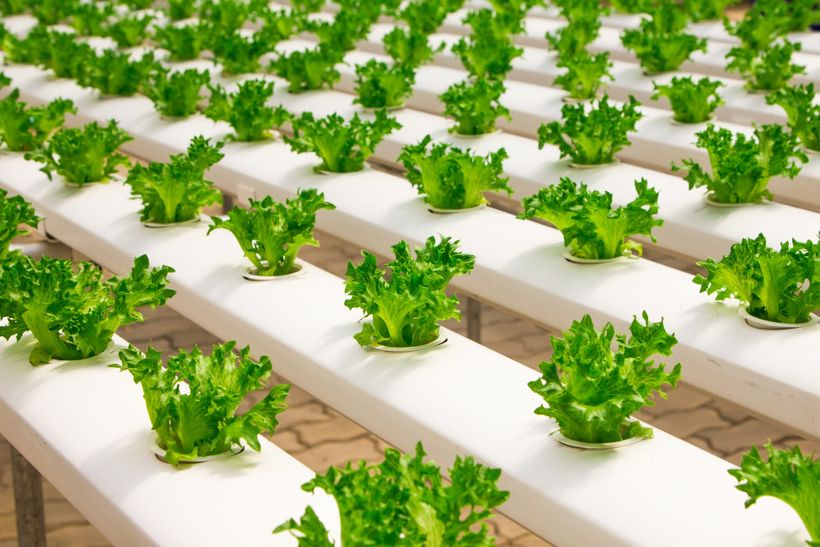 3 Life Lessons From Growing Plants Without Soil | HuffPost
