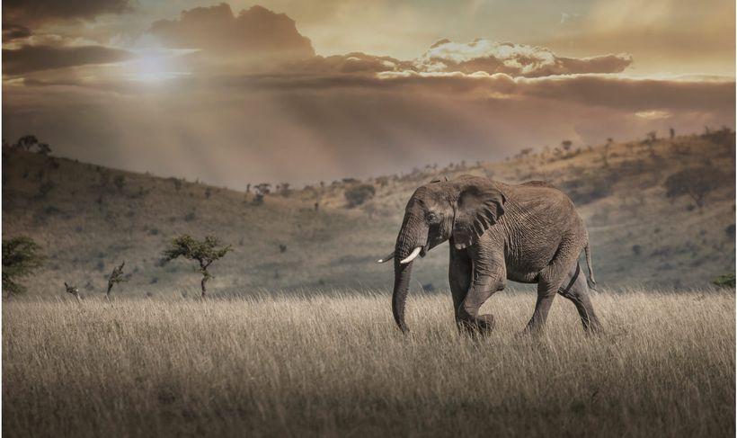 Elephant in Masai Mara National Reserve, Kenya