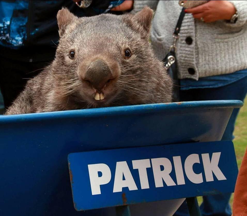 "Patrick enjoyed getting wheelbarrow rides around <a href=""http://wildlifepark.com.au/"" target=""_blank"">Ballarat Wildlife Park"