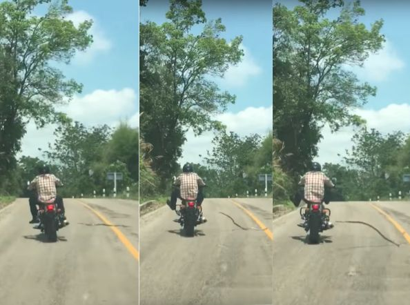 Video captured a motorcyclist nearly picking up a slithering hitchhiker.