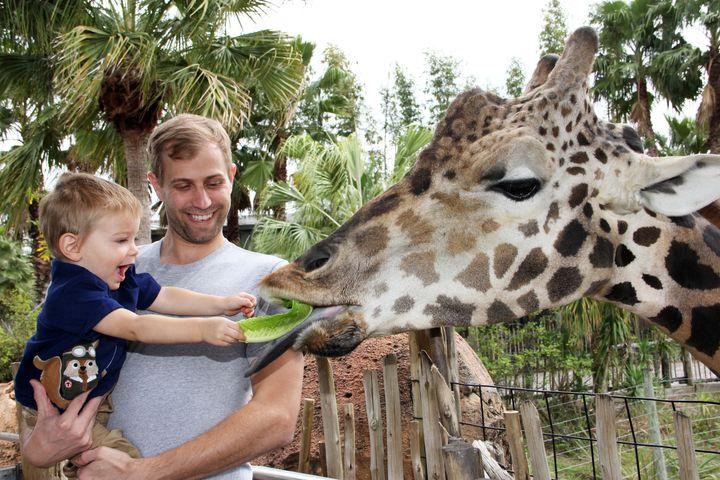 Giraffe feeding at the Lowry Park Zoo.