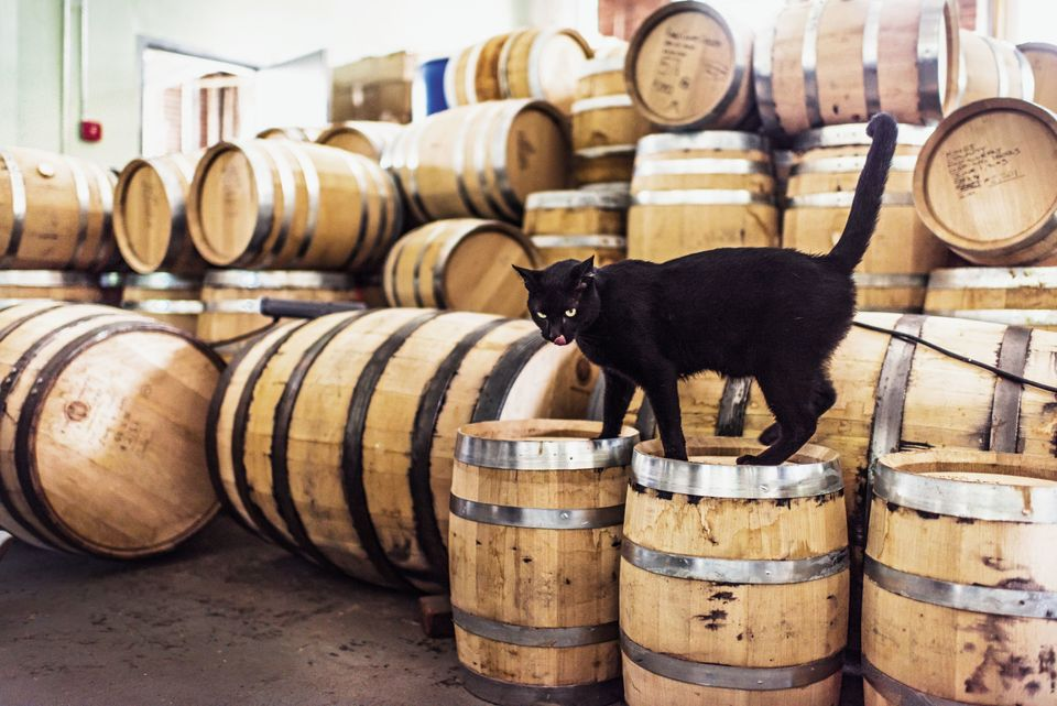 "Known as ""King Jeffie,"" he helps keeps mice away at Kings County Distillery in the Brooklyn Navy Yard."