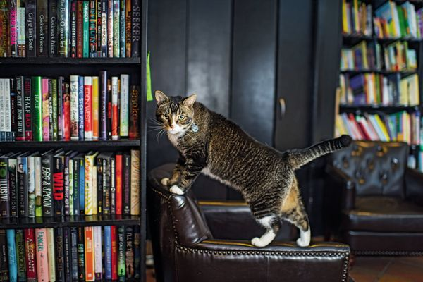 """Nicknamed """"Tiny the Usurper,"""" he lives at Community Bookstore in Park Slope, Brooklyn and has his own <a href=""""https://twitte"""