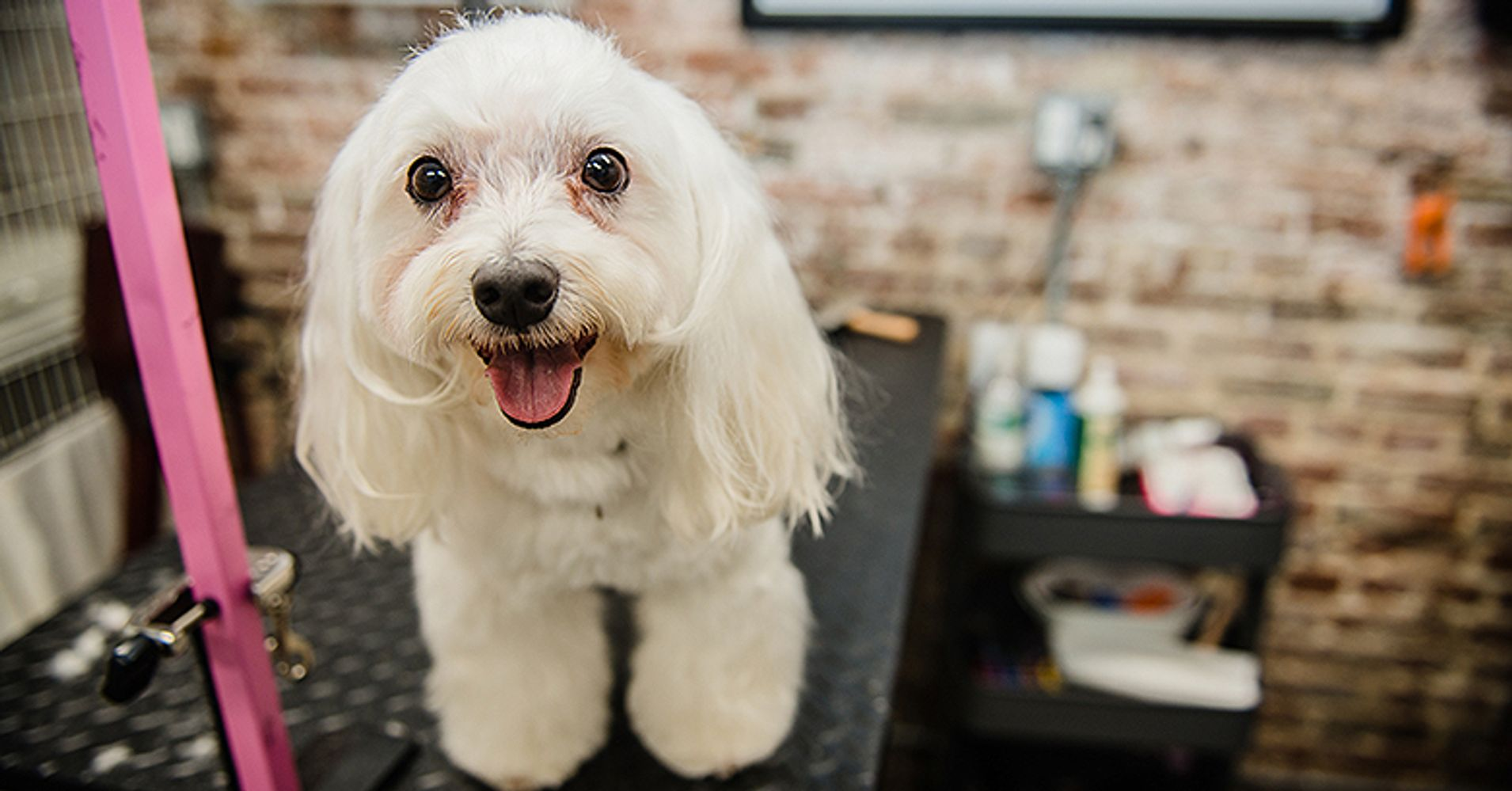 The 10 Best Dog Groomers In Manhattan For 2017 Huffpost
