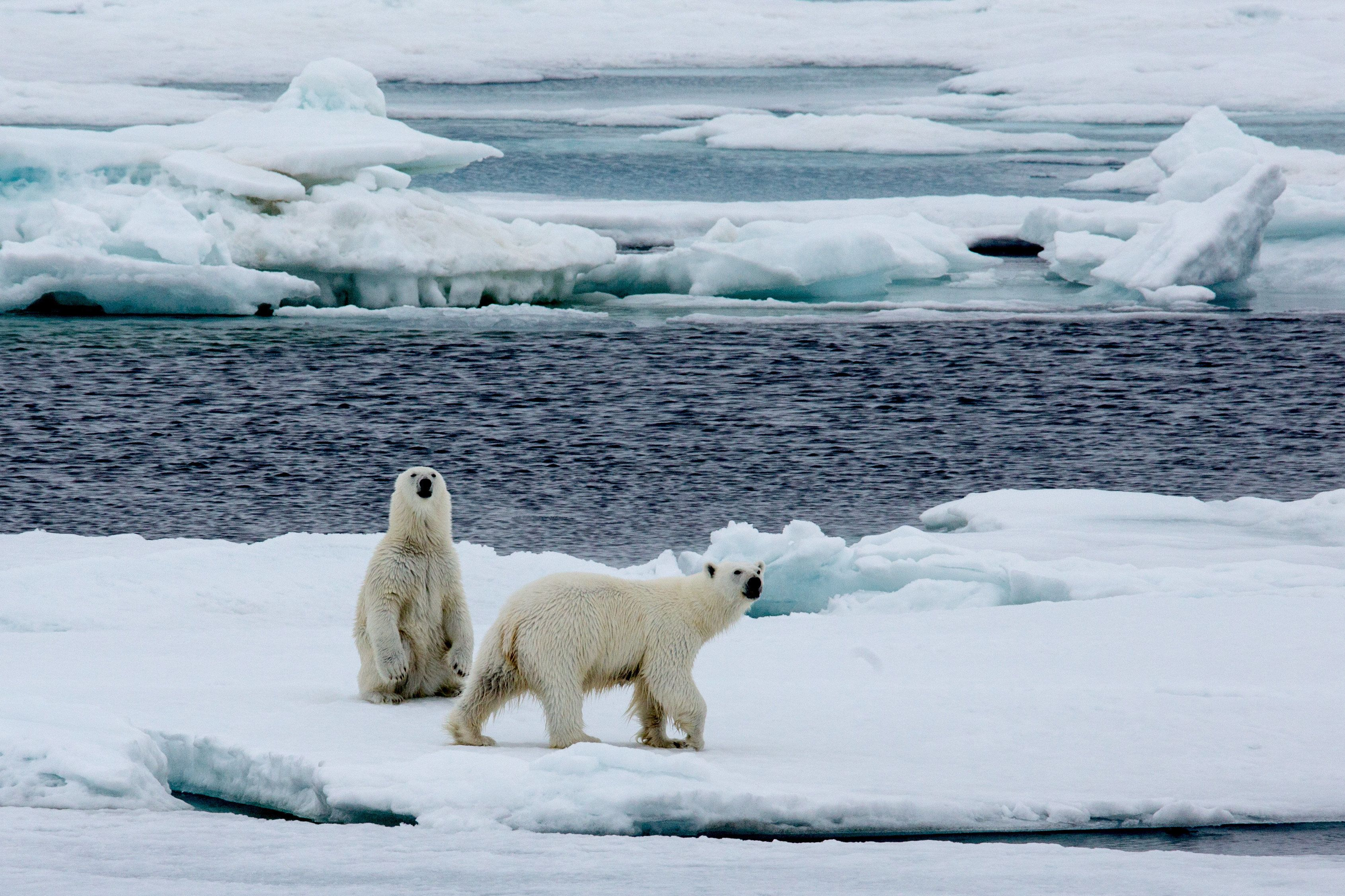 Climate drives 'new era' in Arctic Ocean - BBC News