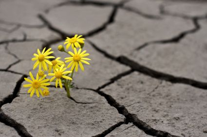 <p>A little optimism is a powerful thing</p>