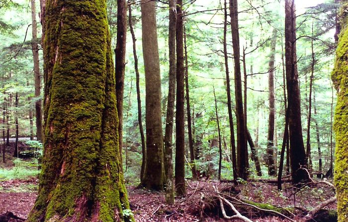 """#1. <a rel=""""nofollow"""" href=""""http://nationalparksimages.org/grsm/"""" target=""""_blank"""">Great Smoky Mountains National Park</a>, No"""