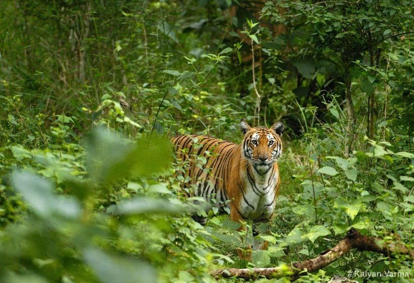 """Without science, we will not be able to place resources toward protecting certain tiger """"source sites"""" that are critical to t"""