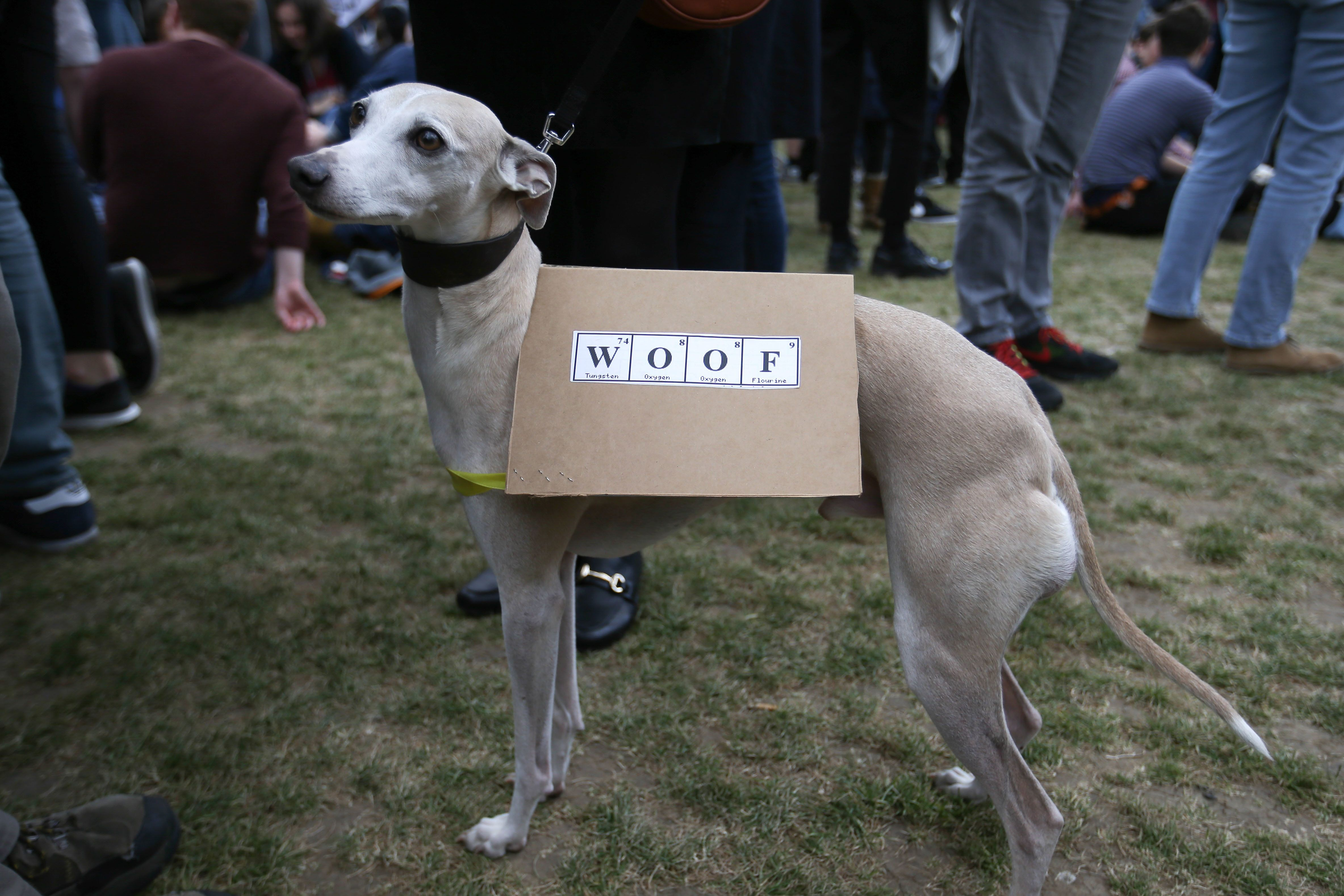 A science-supporting dog at the March for Science in London.