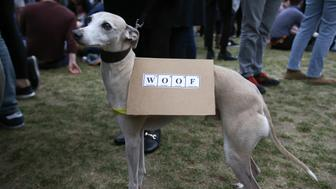A dog carries a placard as scientists and science enthusiasts take part in the 'March for Science' which celebrates the scientific method, in Westminster, central London on April 22, 2017, Earth Day. Thousands of people rallied in support for science in Europe and Australasia on April 22, ahead of a march in Washington, triggered by rising concern over populism and so-called alternative facts.  / AFP PHOTO / Daniel LEAL-OLIVAS        (Photo credit should read DANIEL LEAL-OLIVAS/AFP/Getty Images)
