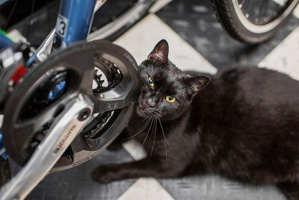 Rescued as a kitten found at a construction site, Spooky now rules On The Move bike shop in Park Slope, Brooklyn, where he ru
