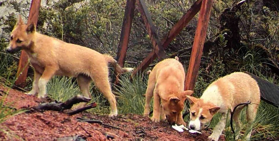 Puppies captured on
