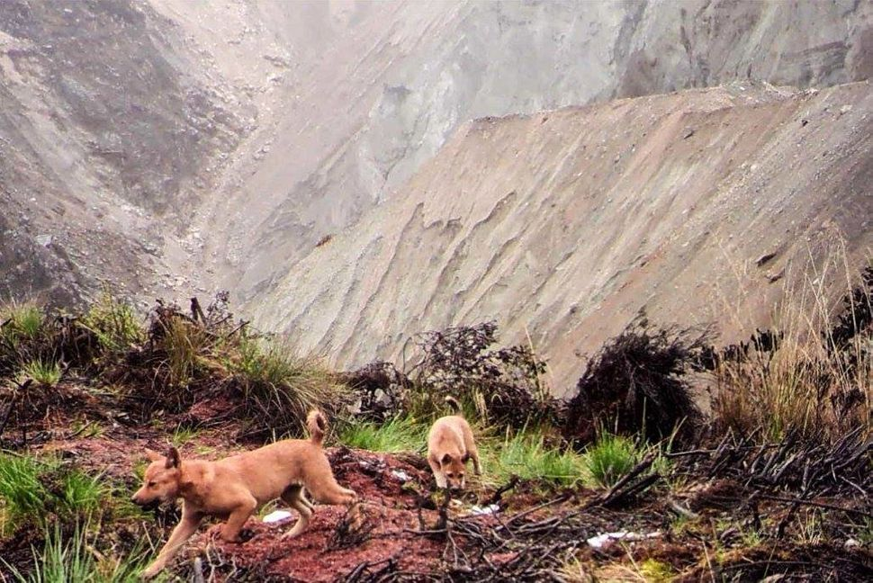 Dogs exploring.