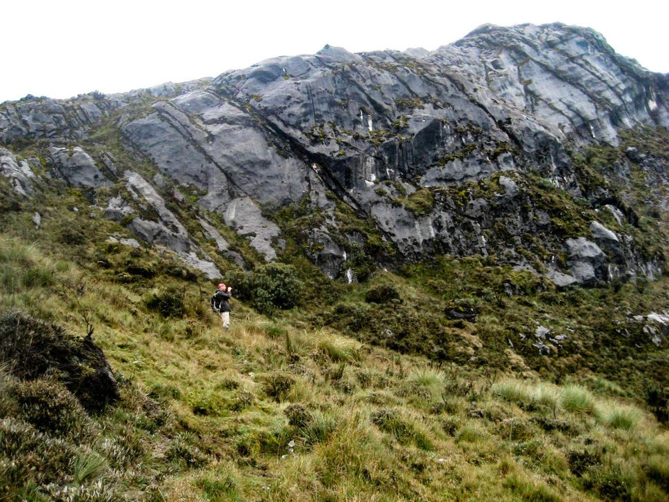 McIntyre pictured here exploring the very remote mountain landscape where New Guinea wild dogs are found.