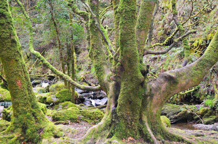 <p>Killarney National Park </p>