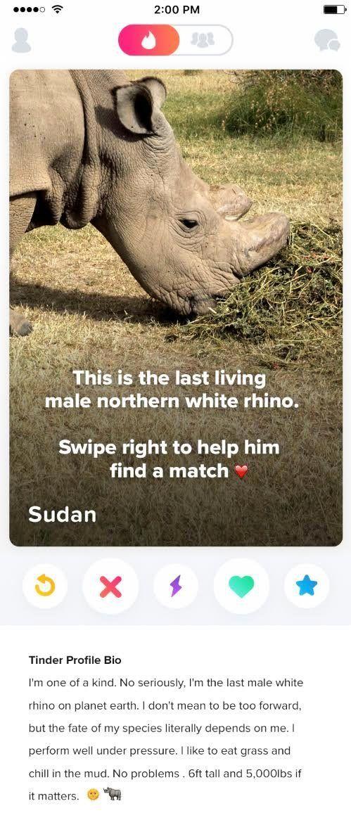 Sudan's Tinder bio.