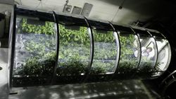 This Futuristic Greenhouse Could Feed Astronauts On