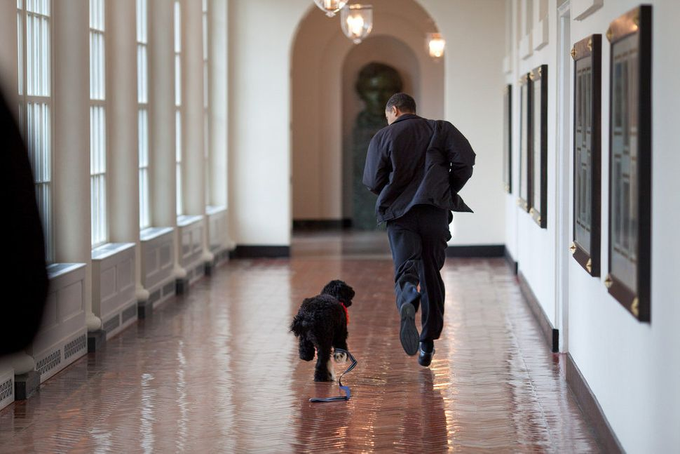 Obama runs down the East Colonnade with family dog Bo on the dog's initial visit to the White House on March 15, 2009.