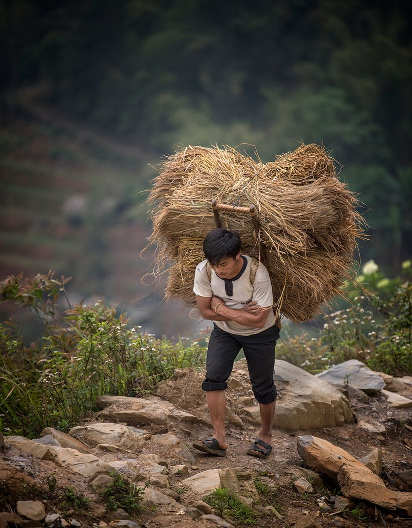 This man is a member of the Hmong ethnic group.  He is carrying a heavy load up a mountain   .