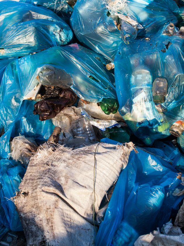 レジ袋を食べる虫がいた...プラスチックを分解して穴を開けるぞ