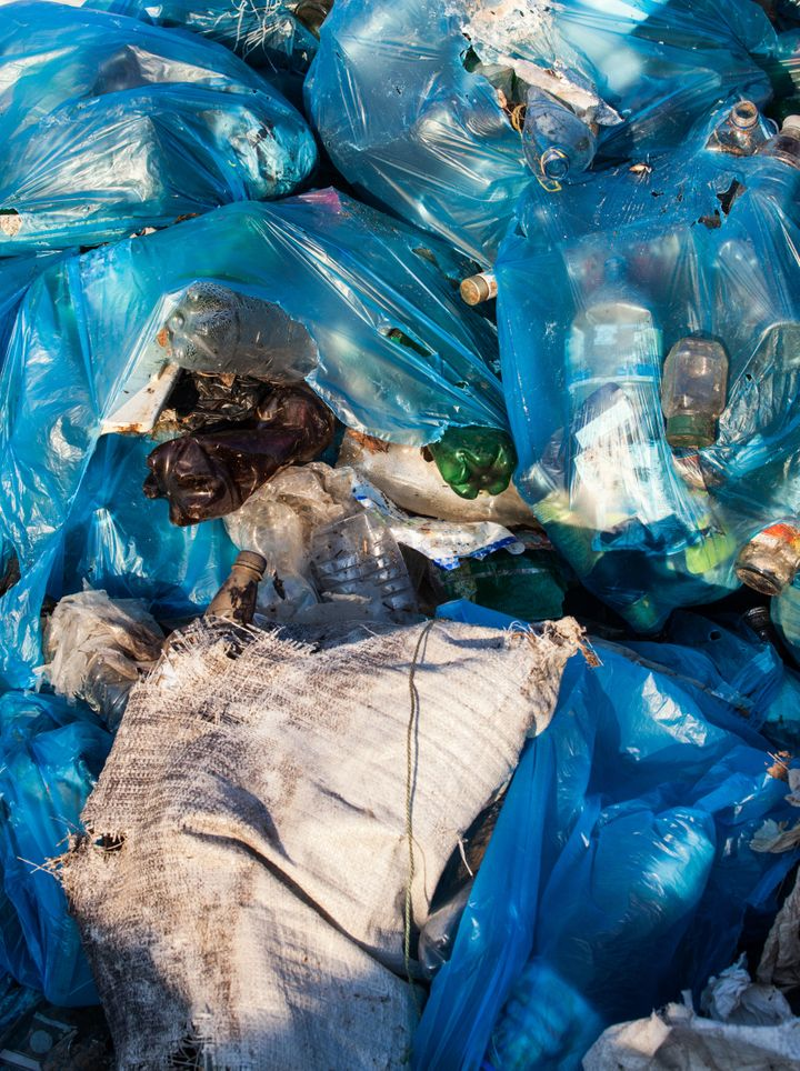 Researchers hope to find a new way to biodegrade plastic bags by using these worms.