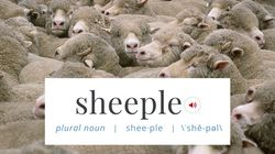 'Sheeple' Has Been Added To The