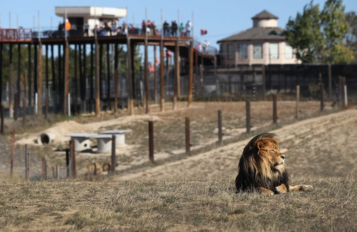 The Wild Animal Sanctuary in Kennsburg, Colorado, said it would have taken in the animals if asked.