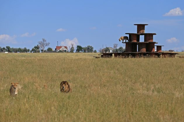The Wild Animal Sanctuary in Keenesburg,Colorado, boasts 720 acres and hundreds of