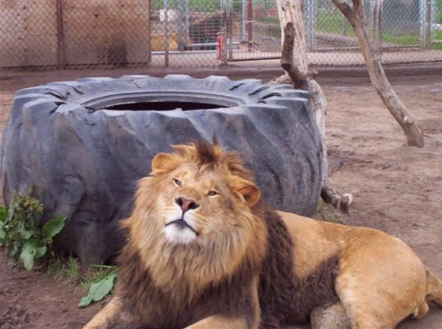 Colorado Animal Sanctuary Euthanises All Its Animals After It's Denied Permit To