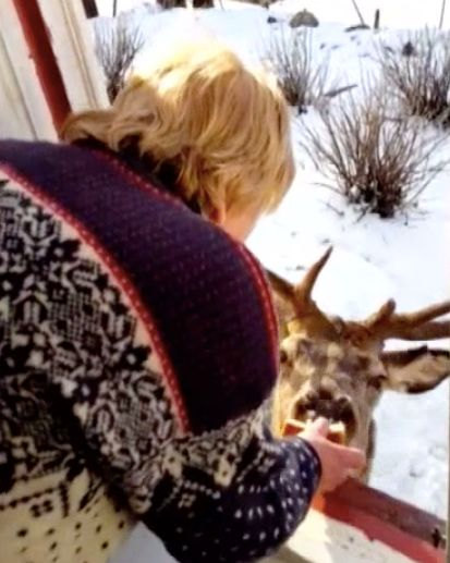 Wild Deer Visits 81-Year-Old Woman Twice A Day For A