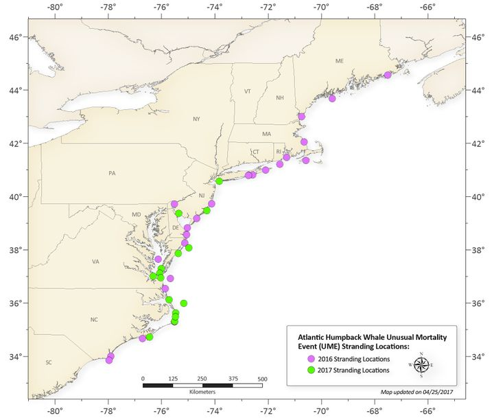 The 2016 and 2017 humpback whale stranding locations along the Atlantic Coast<br>(through April 24)
