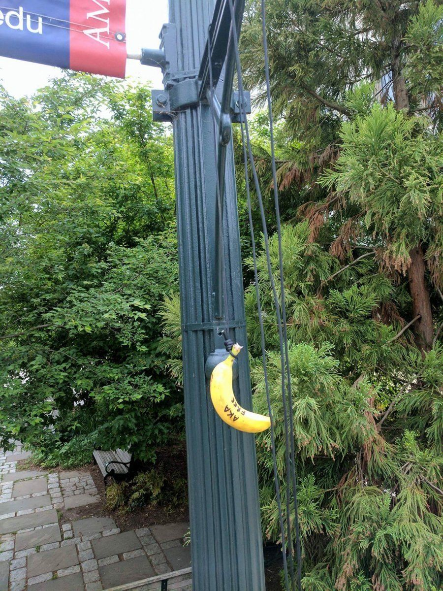 Photos of bananas hanging by nooses have been circulating online targeting  targeted American University's chapter