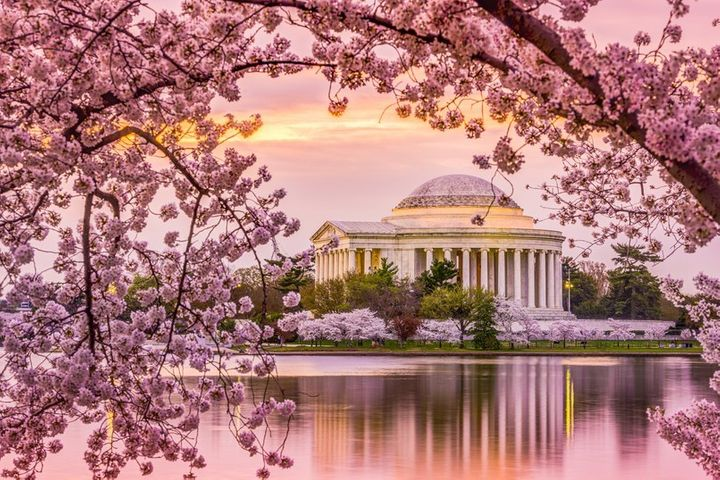 An image of Washington, D.C., one the greenest cities in America, during the spring cherry blossom season.