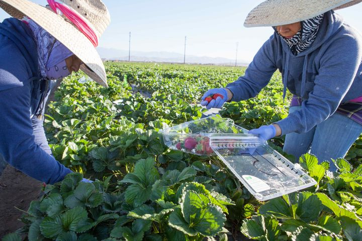 <p>Farmworkers face low pay, pesticide exposure, heat, wage theft, and even forced labor. They need more than weak standards and lax enforcement to bring justice to the fields.</p>