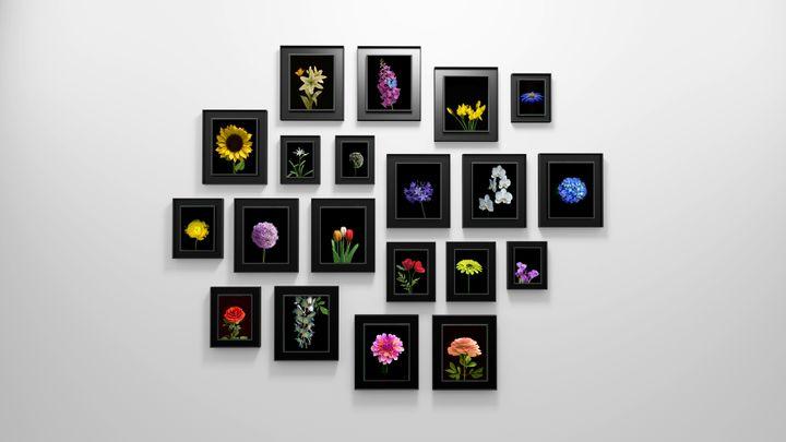 <p>Dominic Harris, <em>Bloomed</em>, 2016, 20 flowers species, edition of 8 + 2AP + 2P, Blackened aluminum, custom electronics and software, industrial LCD screen, time of flight sensor, Large: 51 x 45 x 7 cm, Medium: 41 x 34 x 7 cm, Small: 34 x 29 x 7 cm. </p>