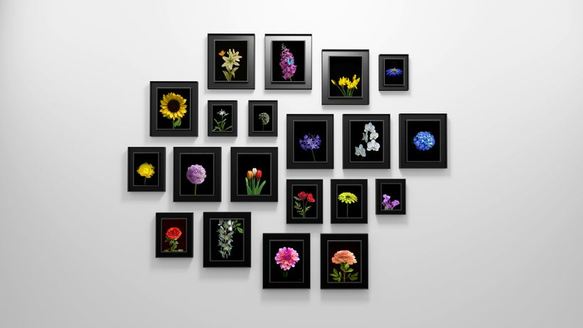 Dominic Harris, <em>Bloomed</em>, 2016, 20 flowers species, edition of 8 + 2AP + 2P, Blackened aluminum, custom electronics a