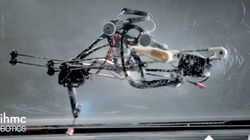 This Ostrich-Like Robot Can Run On Two