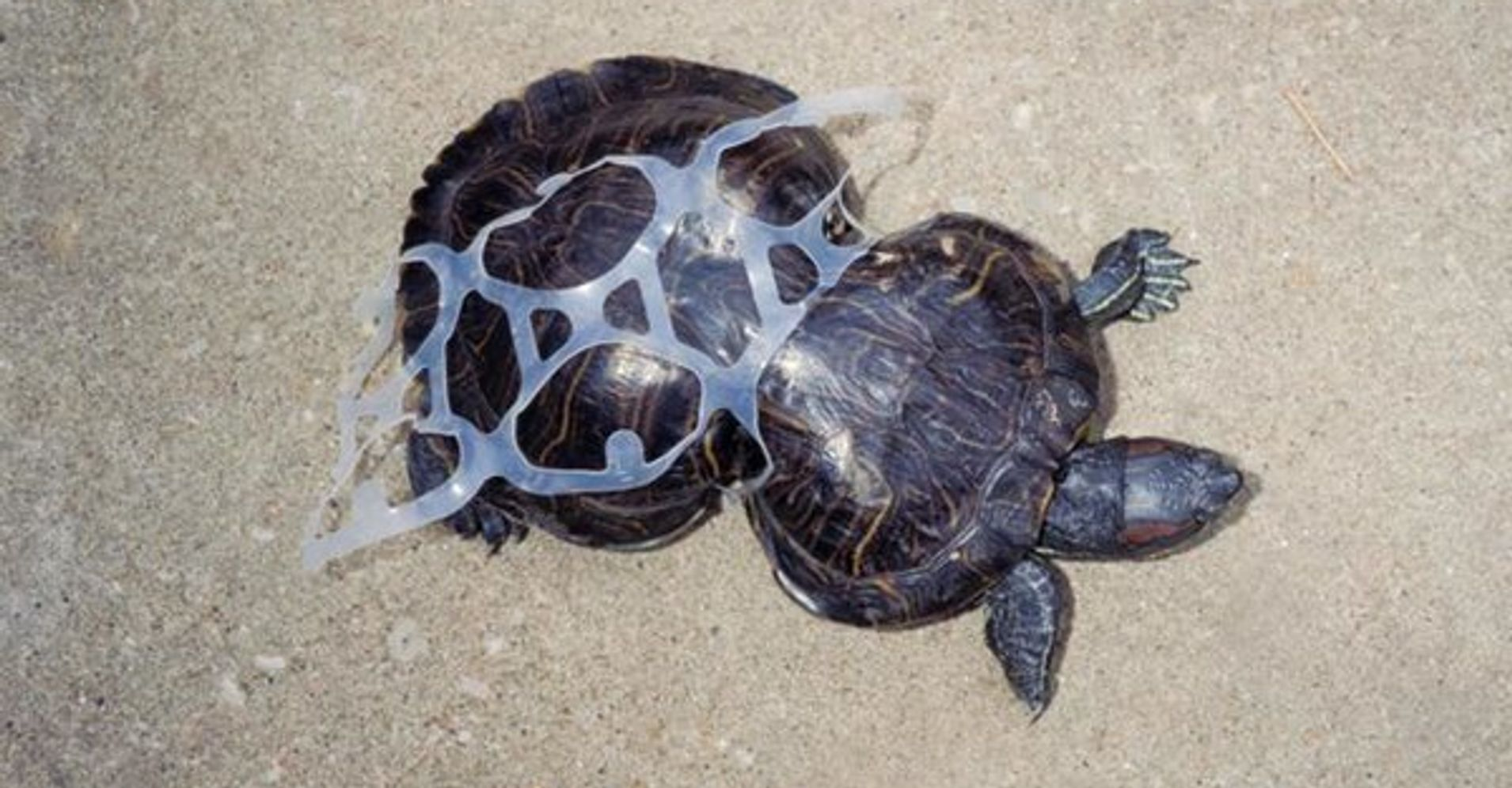 Image result for animals caught in plastic